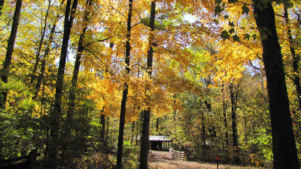 Fall trees along hiking trail at Lincoln Boyhood National Memorial