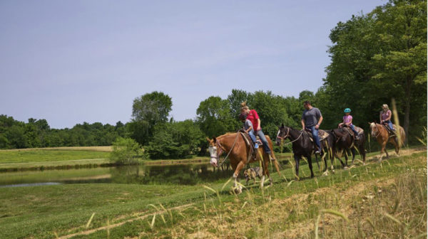 Four horses with riders in a line crossing a field next to a lake